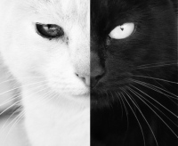 Black_and_White_by_Davved